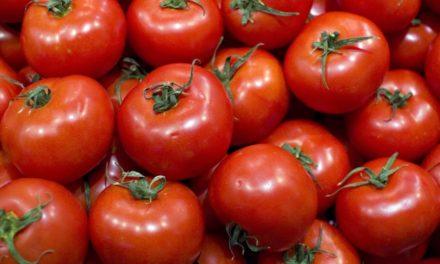 Saint – Louis-Dagana: ouverture prochaine d'une usine de tomate
